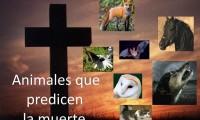 Top 10 animales que predicen la muerte