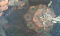 Robot que nada en Fukushima Little Sunfish