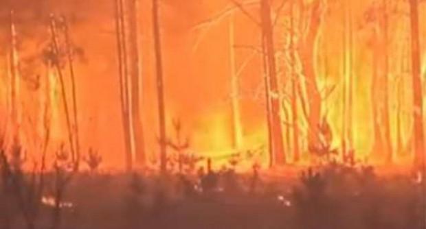 Incendio forestal en la zona de Chernobyl